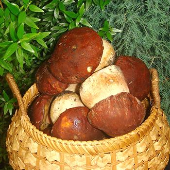 Как хранить белые грибы после сбора и на зиму
