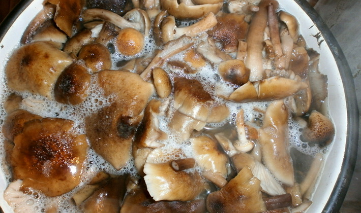 Рецепты блюд из осенних опят
