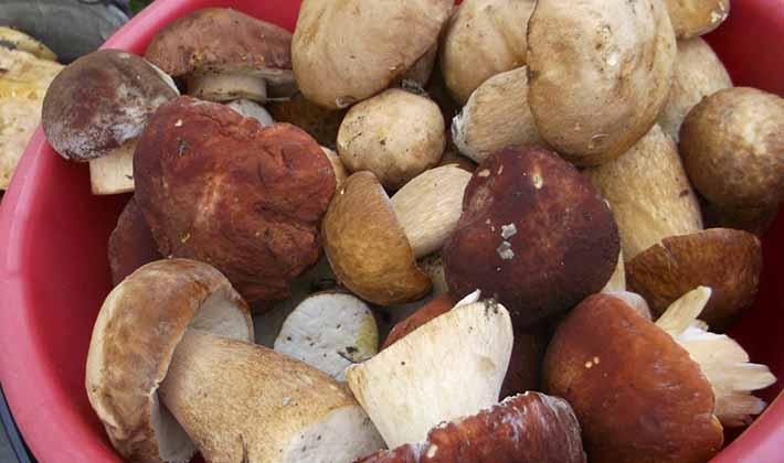 Как правильно морозить белые грибы