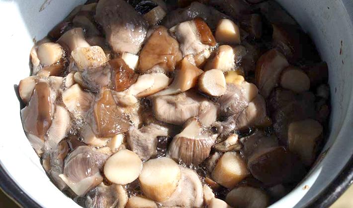 Рецепты и способы приготовления белого гриба