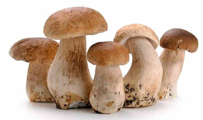 Что лучше приготовить из белых грибов
