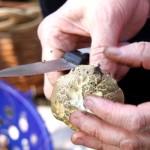 Грибник чистит грибы