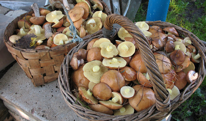 чистка от грибов и паразитов в организме