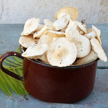 Рецепты засолки грибов рядовок холодным способом
