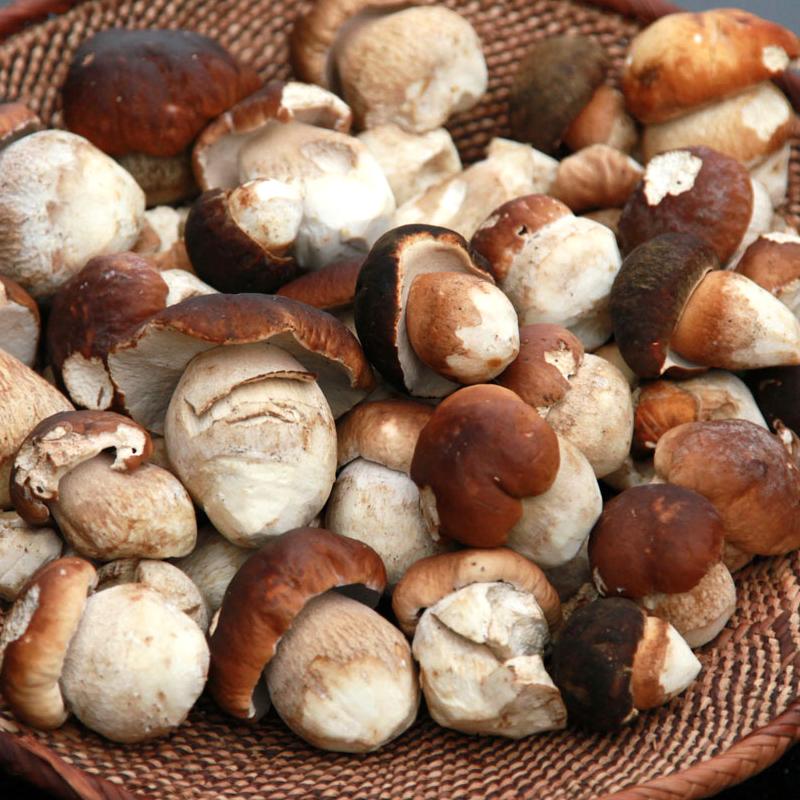 Рецепты и способы приготовления белых грибов на зиму