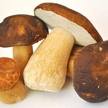 Рецепты варки белых грибов