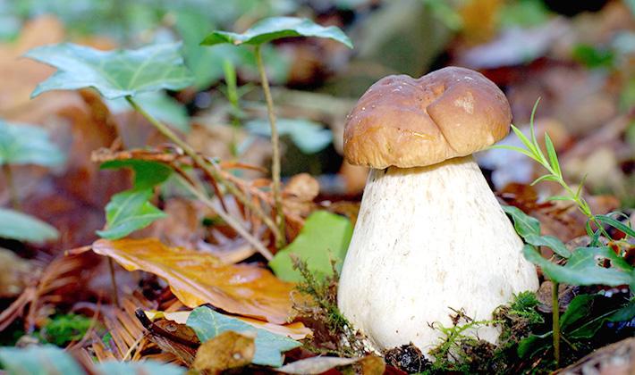 Что лучше делать с белыми грибами