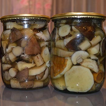 Засолка рядовок горячим способом: рецепты на зиму