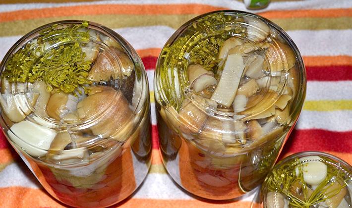 Маринование рядовок на зиму: пошаговые рецепты
