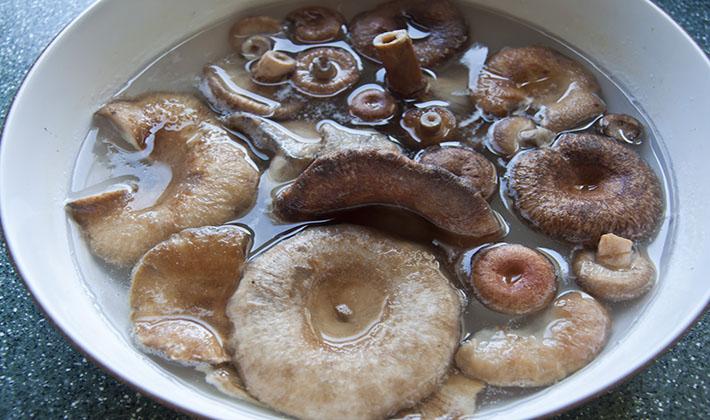 Волнушки быстрого приготовления: засолка и маринование грибов