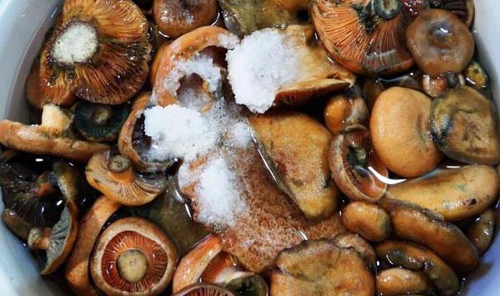 посолить грибы на зиму обычный рецепт