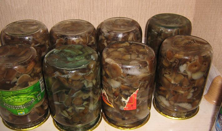 Подберезовики, маринованные на зиму: рецепты приготовления грибов