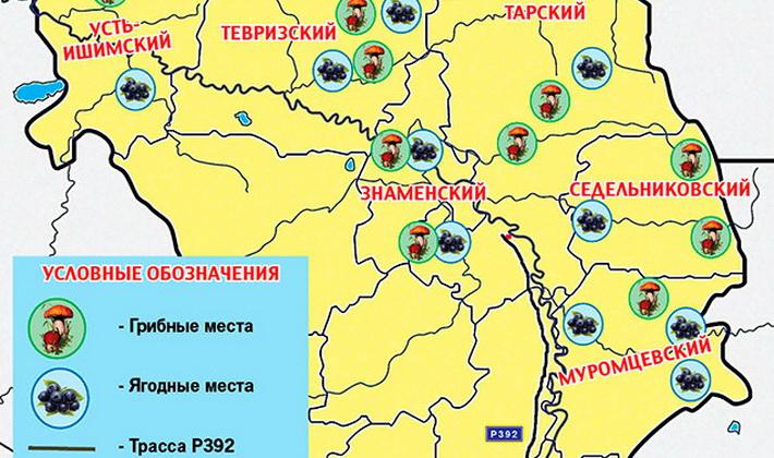 Где растут грузди в Челябинске и Челябинской области?