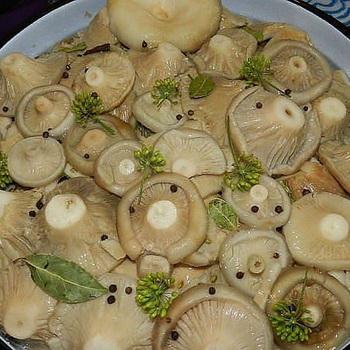 Что можно делать с груздями: рецепты блюд из грибов