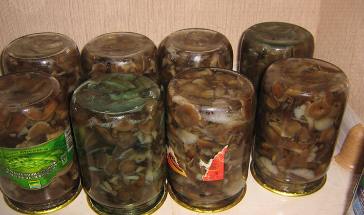 Как правильно мариновать грибы валуи на зиму