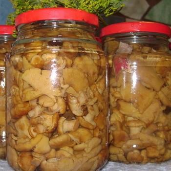 Консервированные лисички: грибные заготовки на зиму