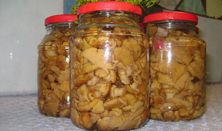Заготовка соленых лисичек холодным и горячим способом