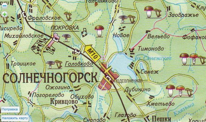 Рыжики в Подмосковье: грибные места и время сбора