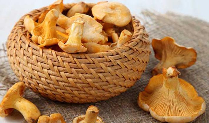 Приготовление лисичек на зиму: рецепты домашних заготовок из грибов