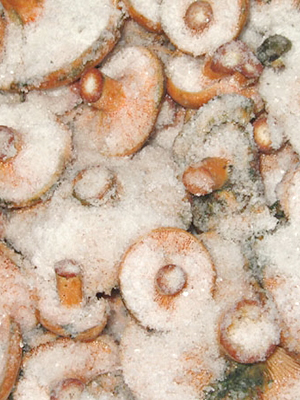 Как солить рыжики под прессом горячим и холодным способами
