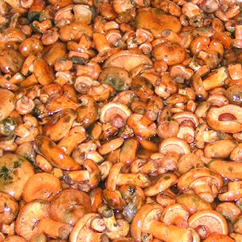 Переработка рыжиков на зиму: рецепты вкусных закусок