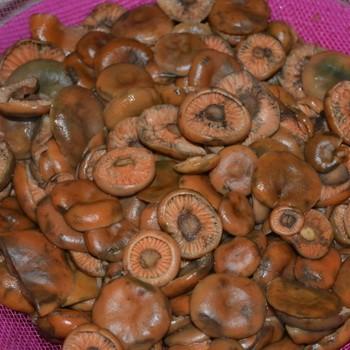 Как солить и мариновать рыжики, чтобы грибы не потемнели