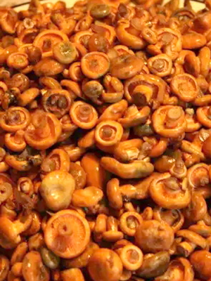 Консервирование рыжиков: лучшие способы заготовки грибов