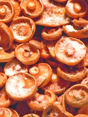Быстрая засолка рыжиков на зиму: популярные рецепты