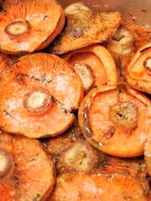 Варианты хранения соленых рыжиков в домашних условиях