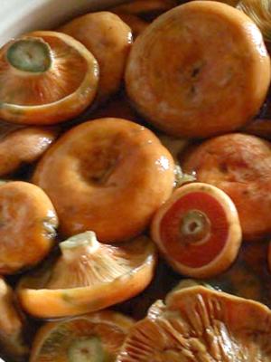 Сухая засолка рыжиков: простые рецепты на зиму