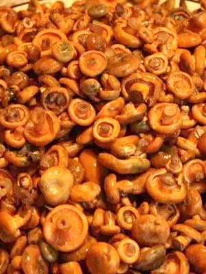 Рыжики с чесноком: рецепты заготовок на зиму