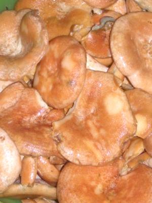 Рыжики, приготовленные в собственном соку: маринование и засолка