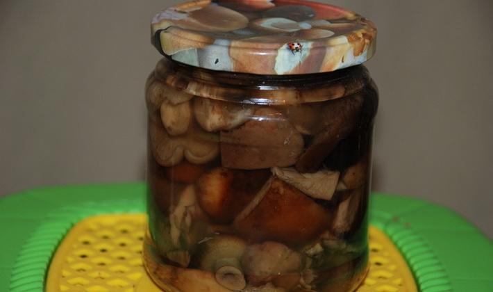 Свинушки на зиму: заморозка и консервация