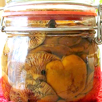 заготовка на зиму грибов рыжиков
