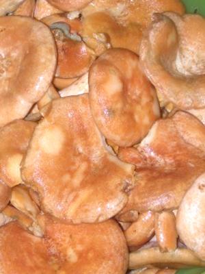 Соление рыжиков холодным, горячим и сухим способами