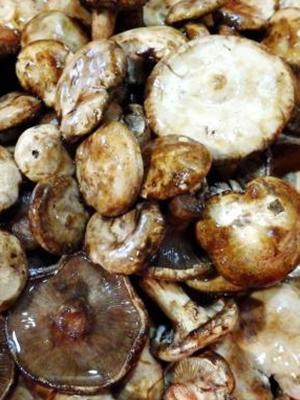 грибы съедобные фото свинухи маринованные