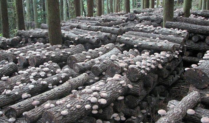 Как реализовать грибы: советы по продаже