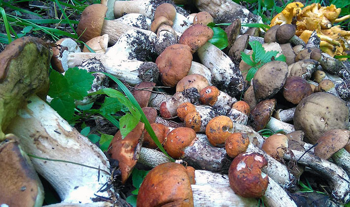 Весенние грибы: съедобные и несъедобные виды