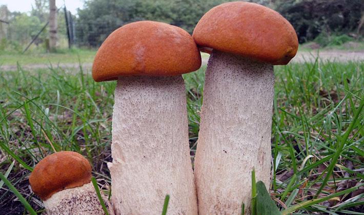 Июльские грибы