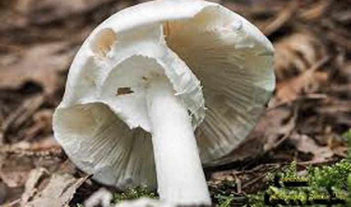 Какие грибы растут в августе