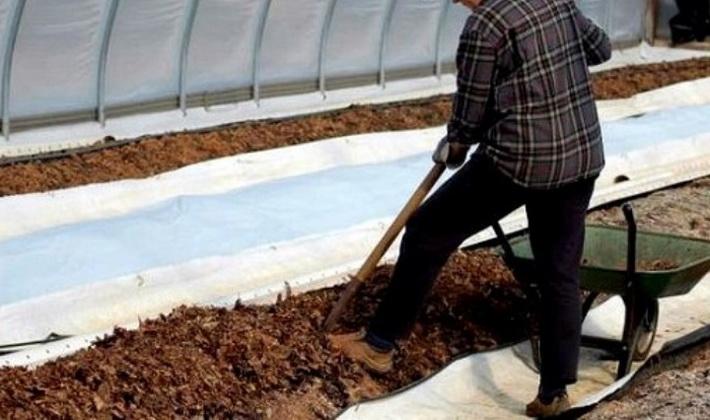 Грибы Как выращивать в искусственных условиях кратко?