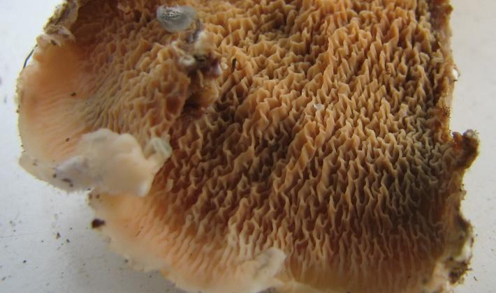 Сентябрьские грибы в Подмосковье