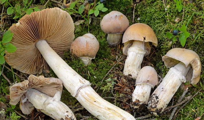 Октябрьские грибы: съедобные и несъедобные виды