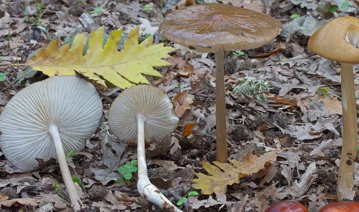 Летние грибы: описание видов