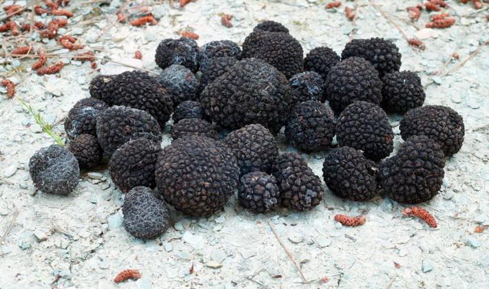 Грибы с круглым плодовым телом