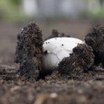 Удобрения для грибов: виды, применение